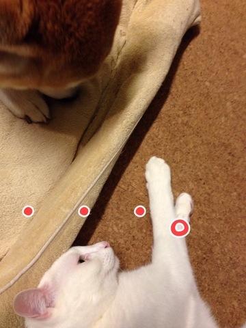 柴犬コタロー日記猫による猫のための「しばいぬのさわりかた」