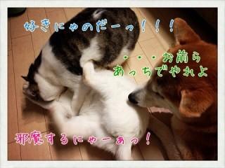 i_2013020500450354