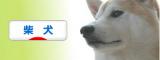 にほんブログ村 柴犬ブログ