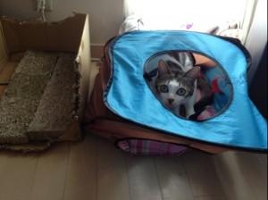 猫と柴犬暮らし